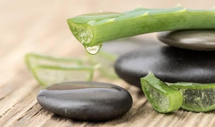 Yağ Bezeleri için Çözüm Sunan Bitkisel Ürünler