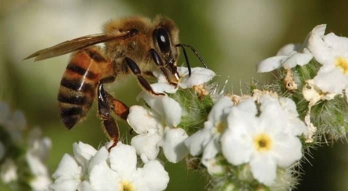Arı Alerjisi Nedir?