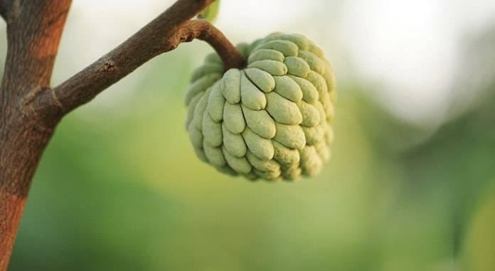 Daha Önce Hiç Duymadığınız 19 Egzotik Meyve